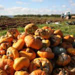 Bristol Food Producers - squash and tractor