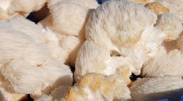 Our Members: Upcycled Mushrooms