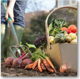 Organic gardening and allotment course at sw city farm bristol food network - Practical tips for gardening in june ...