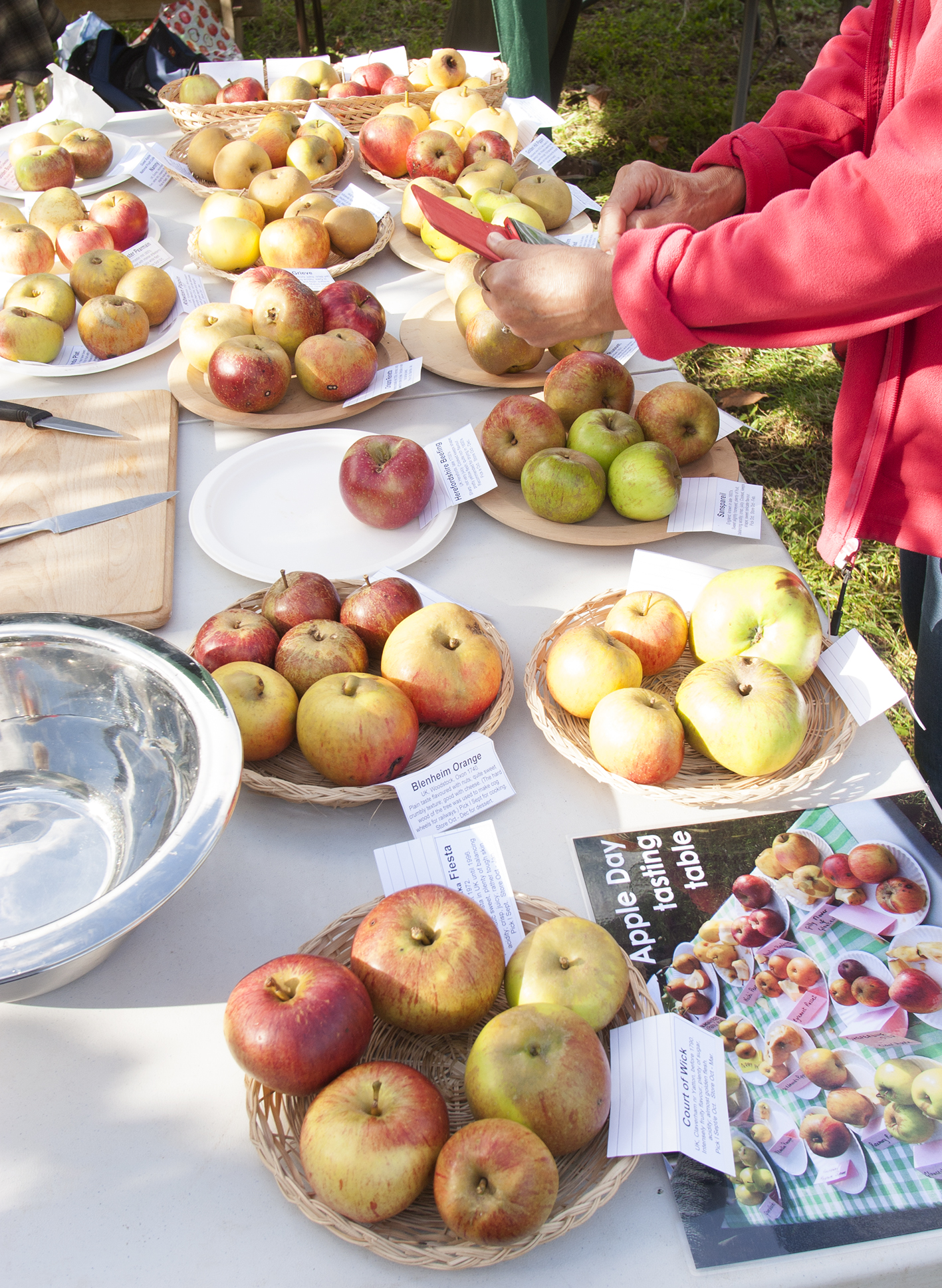 Apple tasting table 2016