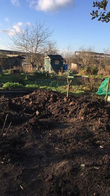 Avon Organic Group Talk: Starting an organic allotment with Chris Collins, Head of Horticulture at Garden Organic